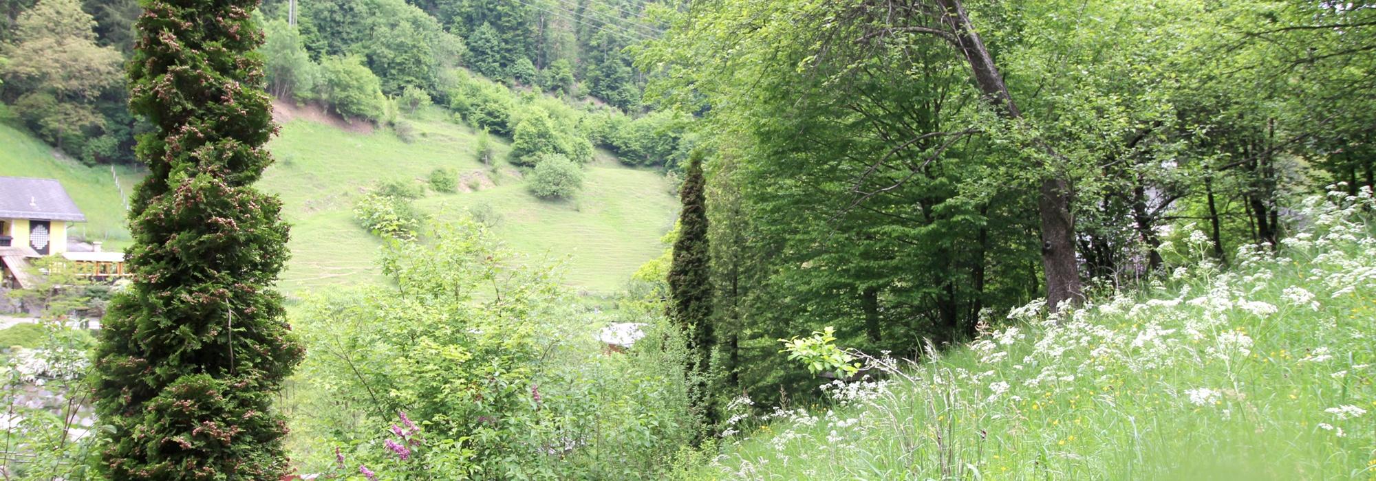 Thal – 2415 m2 Grundstück mit Herausforderung für Individualisten zu verkaufen
